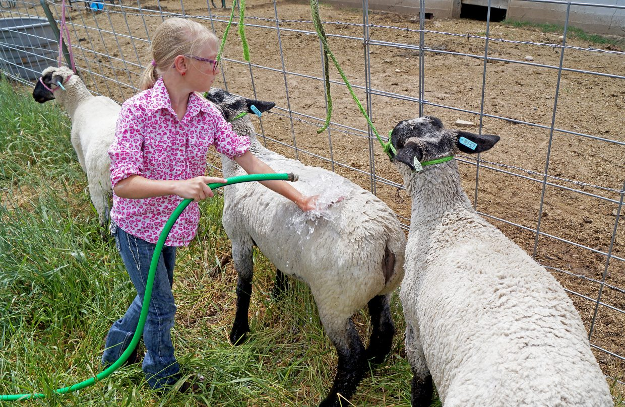 Joslyn Bacon, 10, washes her sheep.