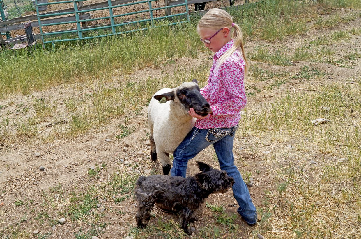 10-year-old Joslyn Bacon poses her sheep.