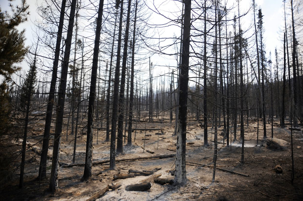 Intense fire quickly went through hundreds of acres in the Beaver Creek fire Wednesday.