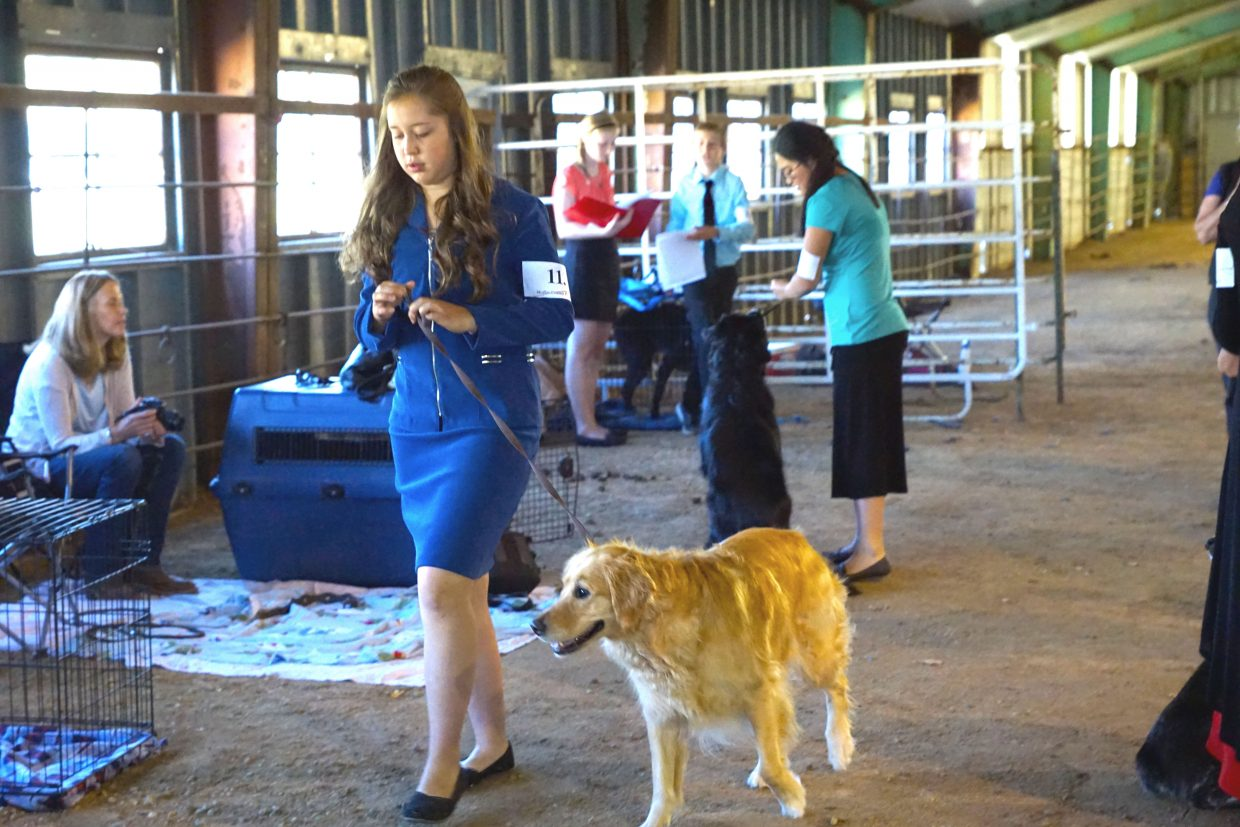 Allison Jacobson and her dog Bella prepare for their next round of competition at dog show during the 2016 Moffat County Fair.