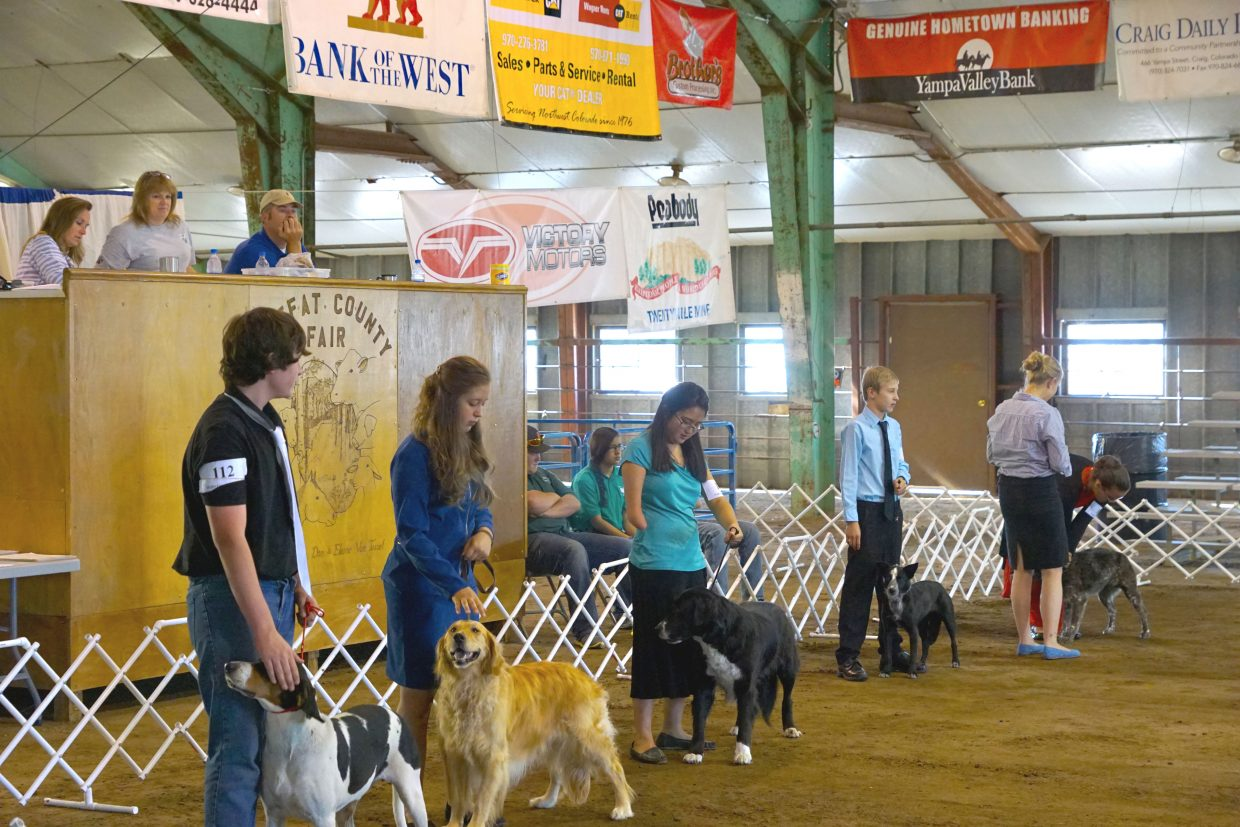 Competitors line-up for the 2016 4-H Dog Show at the 2016 Moffat County Fair.