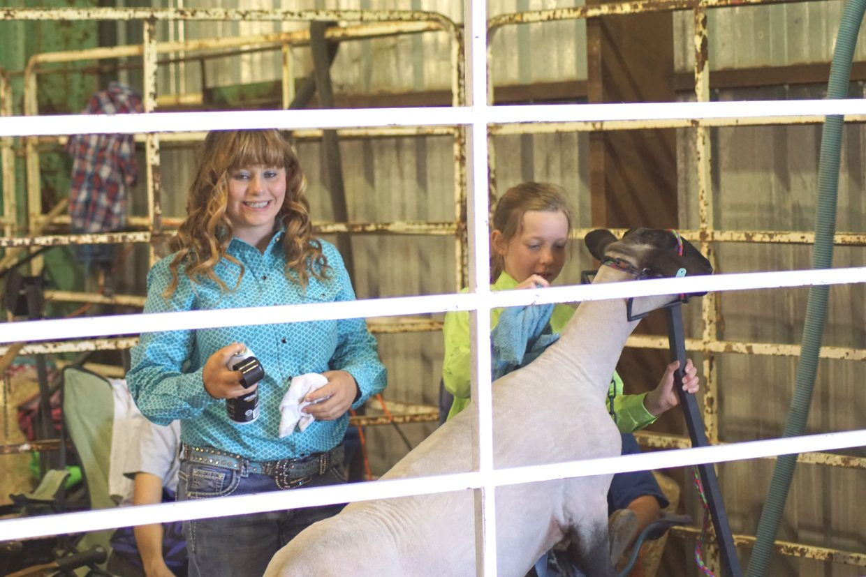 Syndie Harding helps Kayden Grinolds as she prepares her sheep for the 2016 Moffat County Fair Sheep Show.