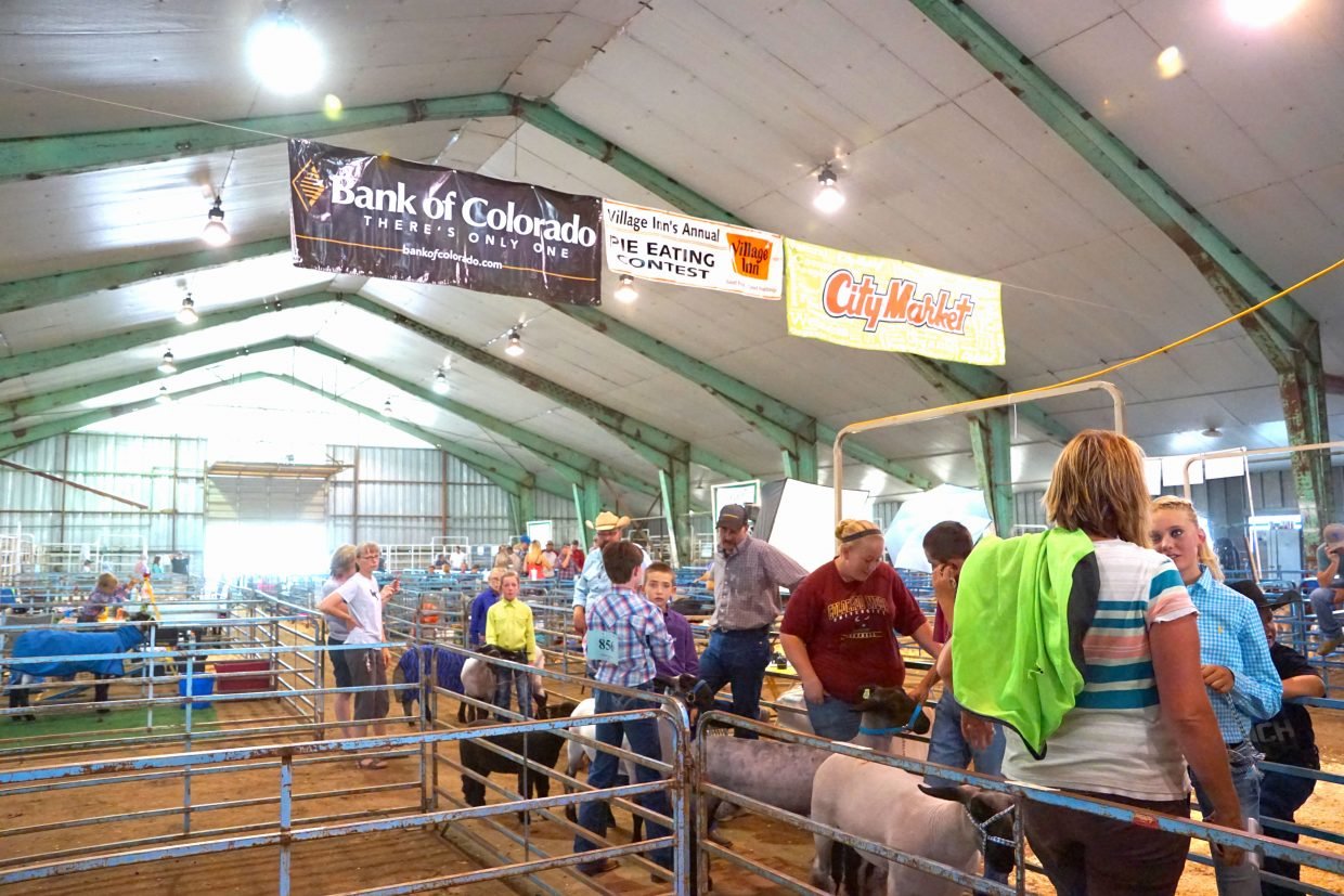 Contestants for the 2016 Moffat County Fair Sheep Show and their helpers wait to be admitted into the show ring.