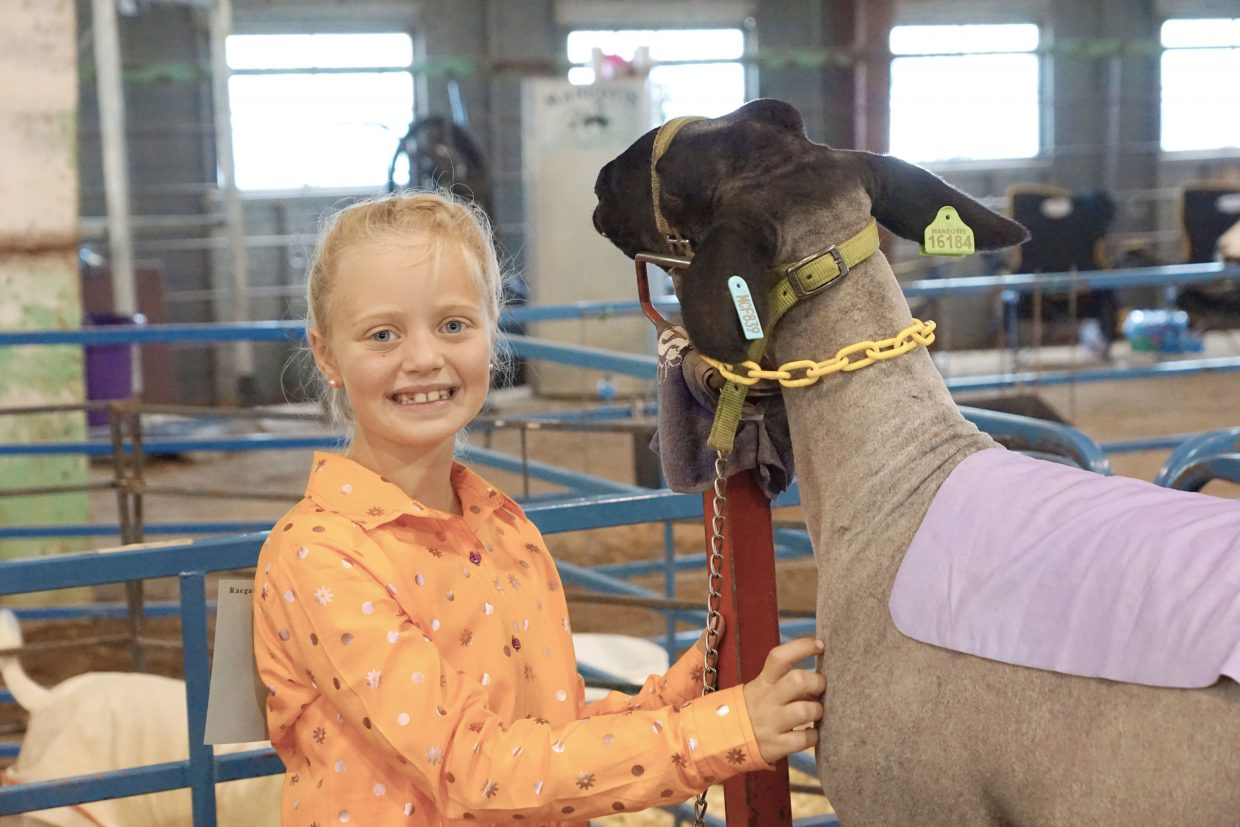 Raegan McMillen and her lamb AZ prepare for the show ring at the 2016 Moffat County Fair.