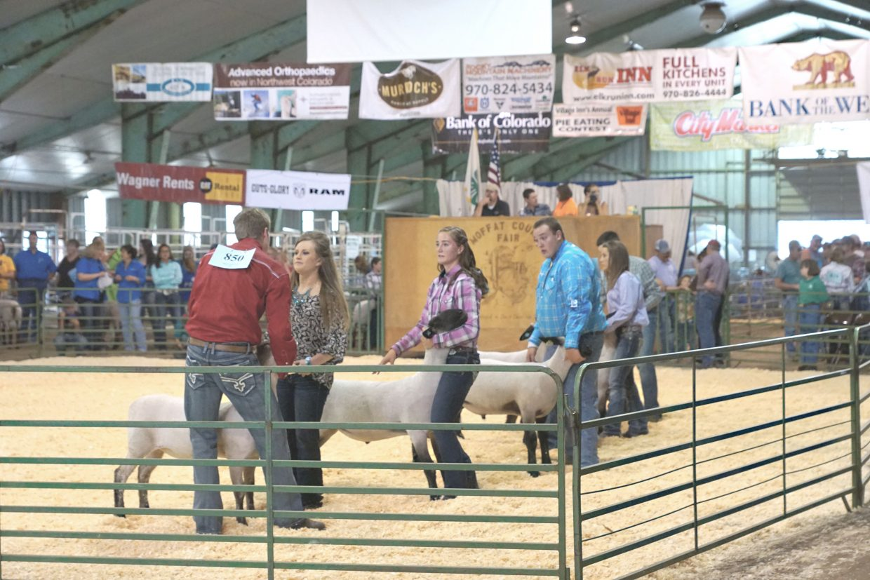 Youth enjoy the Senior Sheep Showmanship class at the 2016 Moffat County Fair. All fair results will be shared in the Sept. 30 Craig Daily Press special section.