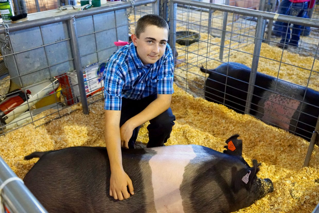 Grand Champion market swine Missy enjoys a tummy rub from owner Dustin McLaughlin after the competition at the 2016 Moffat County Fair.