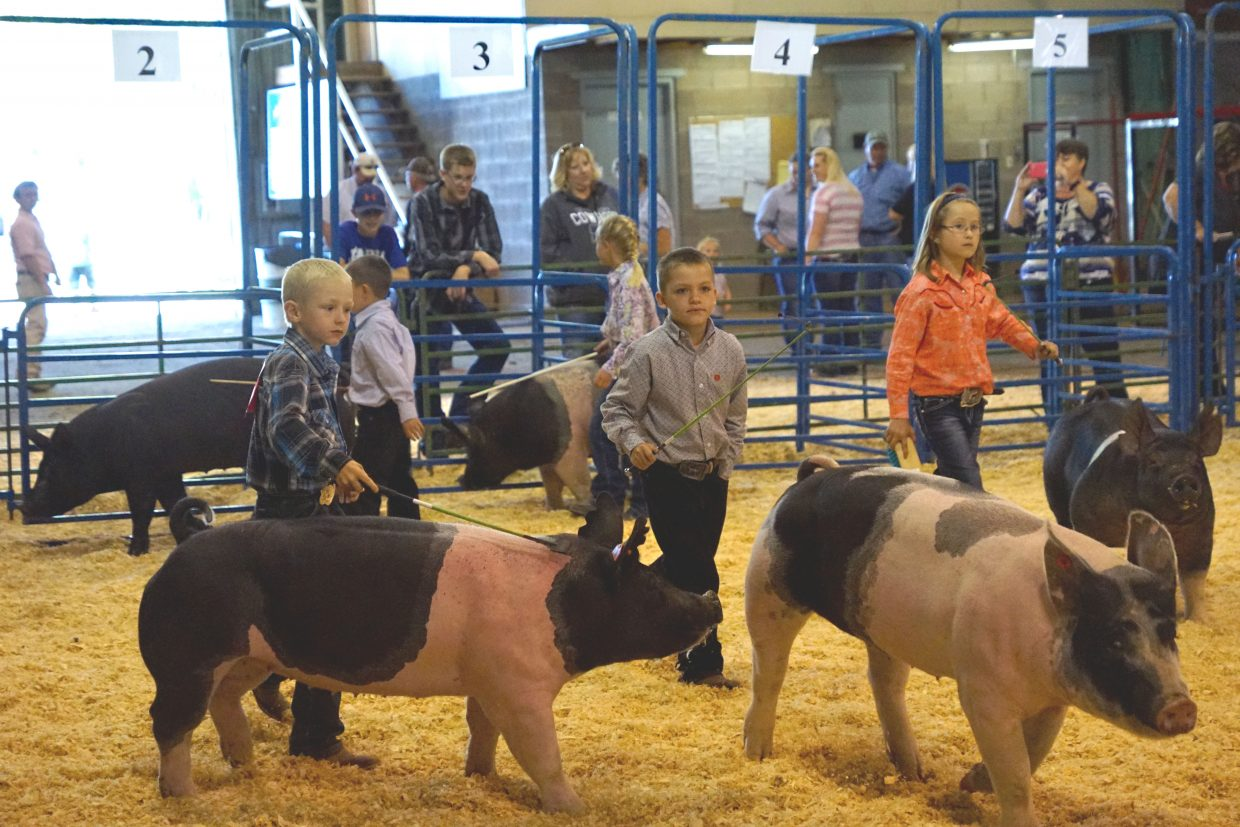 Competition is fierce in swine showmanship as families looks on Friday morning during the Moffat County Fair.