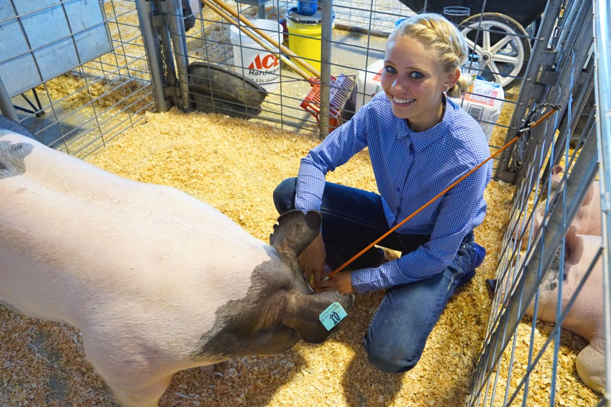 Trinity Boulger brushes the pig she calls Jaylo at the 2016 Moffat County Fair..