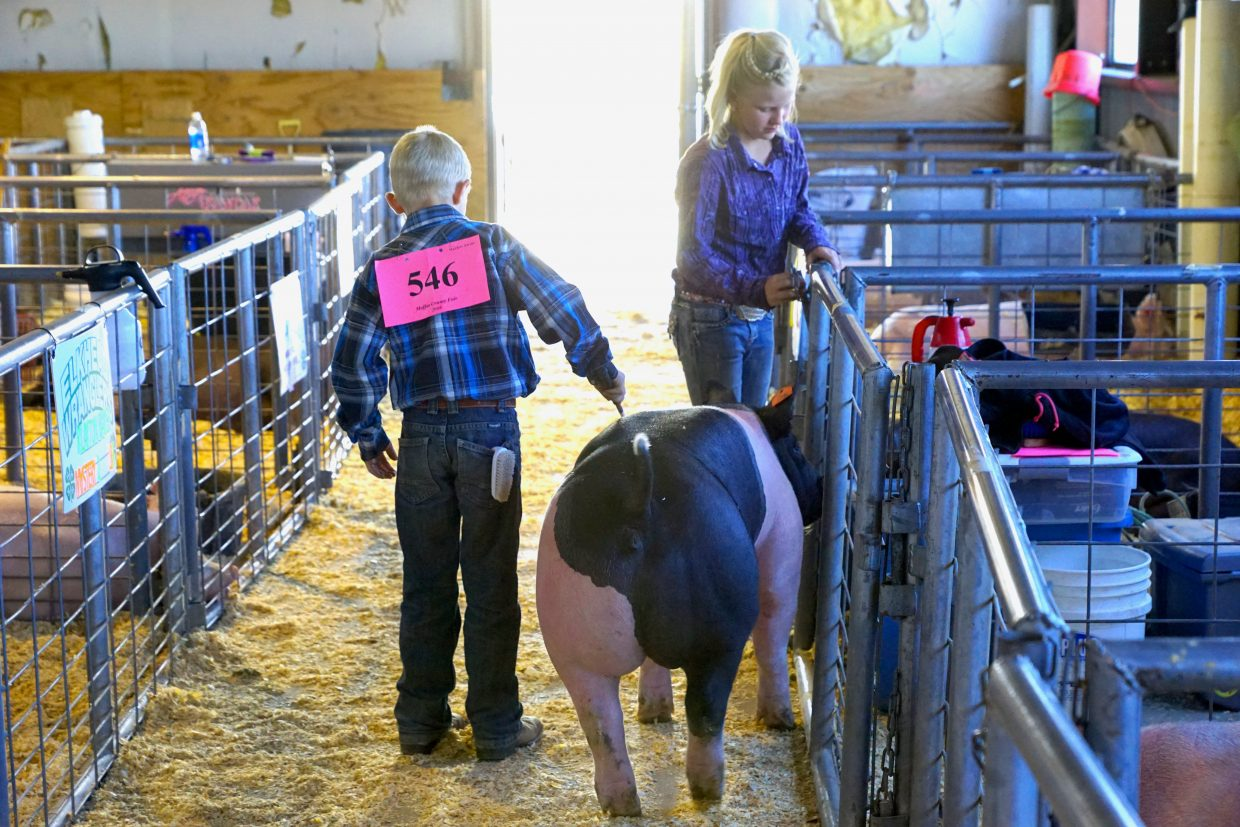 Chance Knez and Peaches the pig are assisted by sister Katie Jo Knez prior to the pee-wee showmanship competition at the 2016 Moffat County Fair.