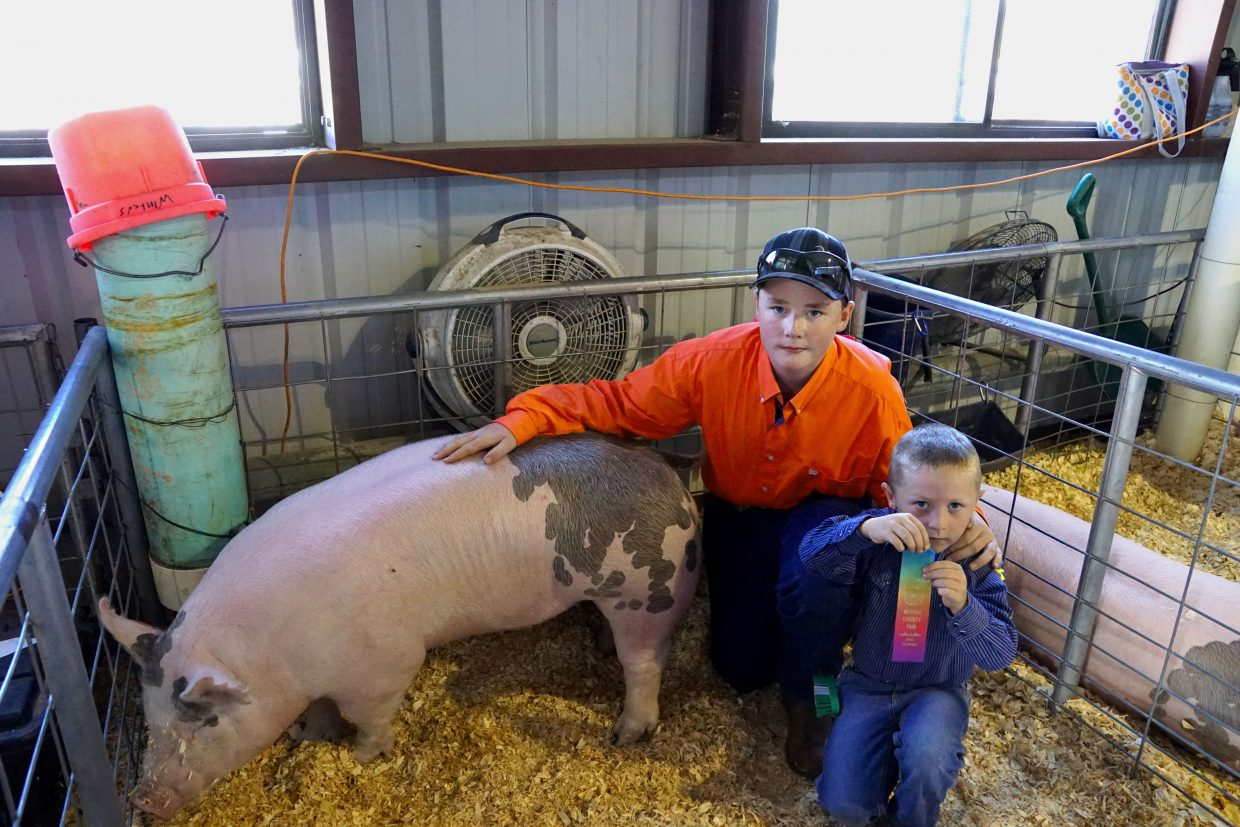 Joseph Bacon proudly holds his pee-wee showmanship participant ribbon. Joey Winter's lent advice and his show pig to Bacon for the competition.