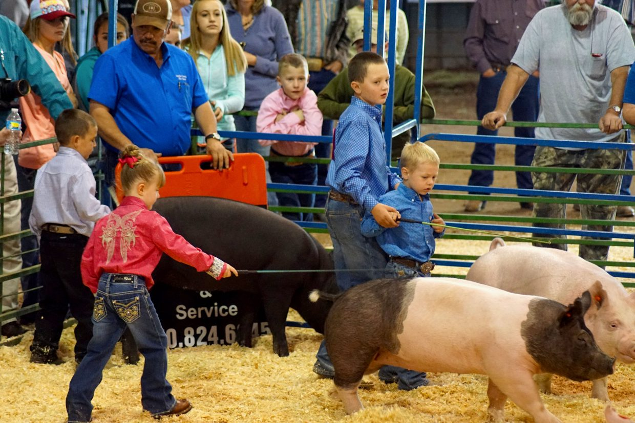 Children under 8 years of age get a little help from their families and gain experience in the pee-wee showmanship competition at the 2016 Moffat County Fair.