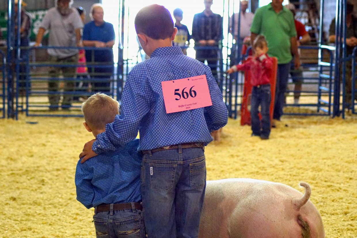 This pee-wee get's a helping hand from his older brother during the pee-wee showmanship competition at the 2016 Moffat County Fair.