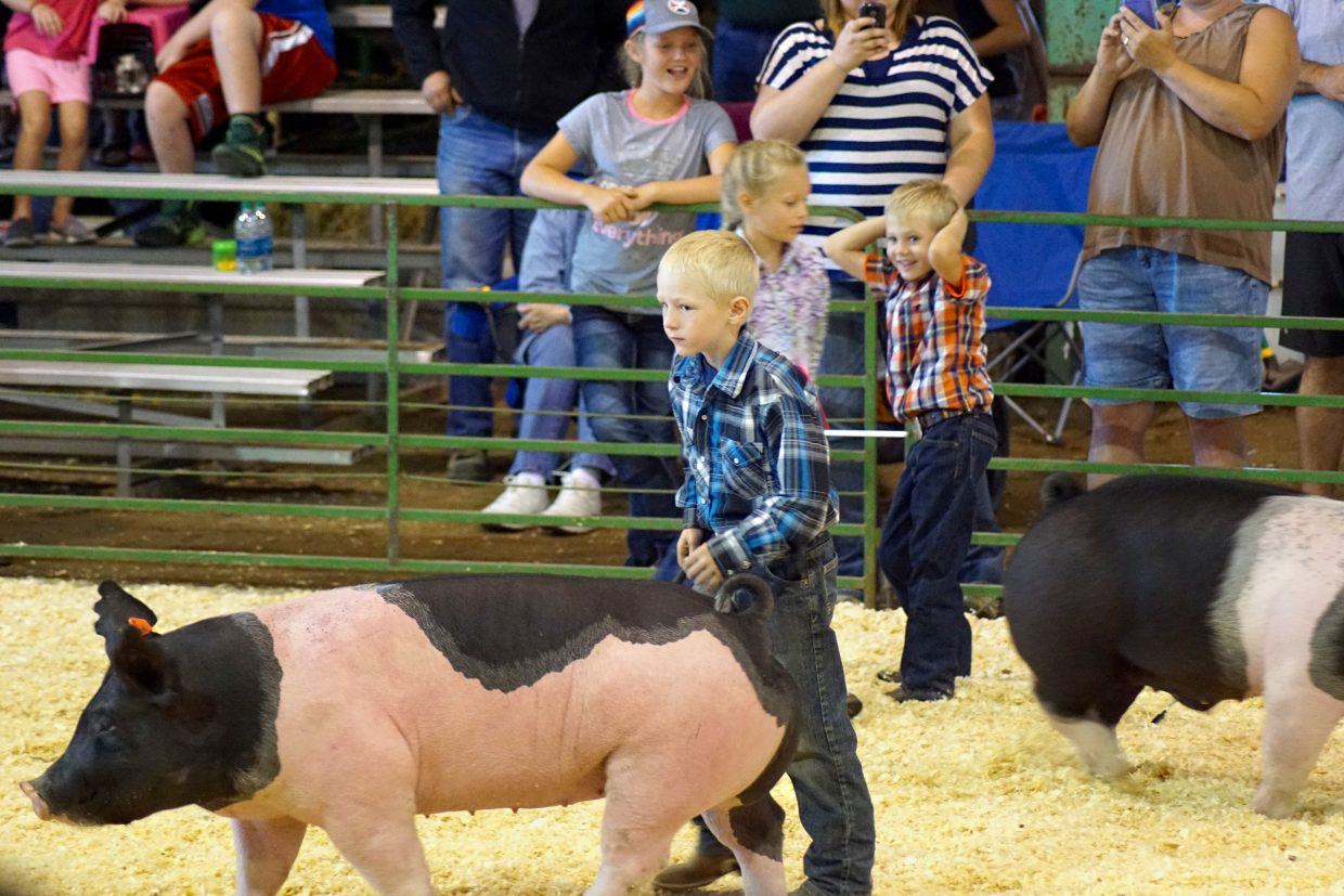 The pee-wee showmanship competitors practice keeping their pigs perfect for the 2016 Moffat County Swine Show judge.