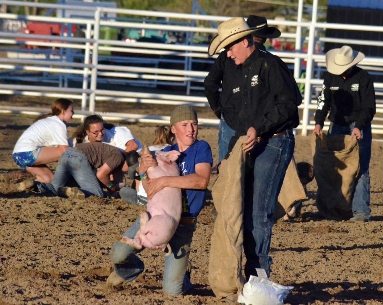 Entrants in the Catch-a-Pig contest Friday night at Moffat County Fairgrounds get their new animals under control. Kids who claimed a pig also received a bag of feed.