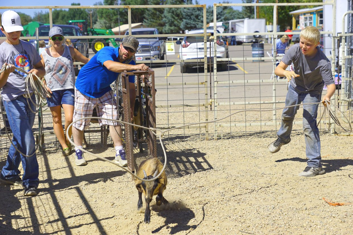 Ian Hafey tosses his rope out to catch a goat at the 2016 Moffat County Fair goat roping contest.