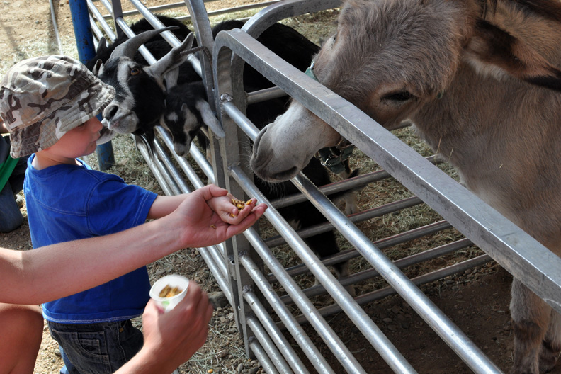 Collin Simpson, 2, of Hayden, feeds a donkey Tuesday with coaxing from his aunt, Jacquelyn Denker, at the Carson and Barnes Circus at the Moffat County Fairgrounds. The petting zoo also included llamas and goats.