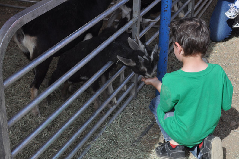 Trevor Forbes, 5, of Hamilton, feeds a goat Tuesday at the Carson and Barnes Circus at the Moffat County Fairgrounds. His mother, Melissa Forbes, said Trevor and his sister, Felicity, 3, had never been to a circus before.