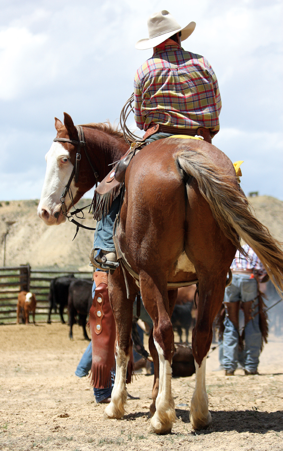 A horse looks behind him as his rider watches branding June 7 at Vermillion Ranch in western Moffat County.