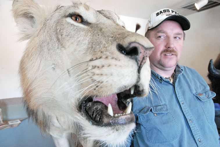 """Craig taxidermist Scott Moore stands in June next to the prize-winning piece, """"Can't Kill the King,"""" which he created with local taxidermist Leland Reinier. The two men won first place for collective artist at the Colorado State Taxidermy Competition earlier in June in Salida. The piece, which features an African lion whose skin was purchased from eBay, is on display at Moore's business, Mountain Man Taxidermy in Craig."""