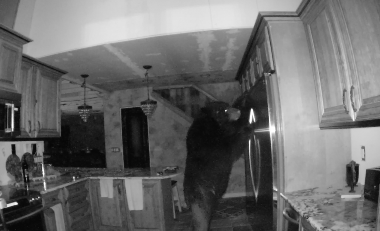Bear spends several hours rummaging through Colorado home