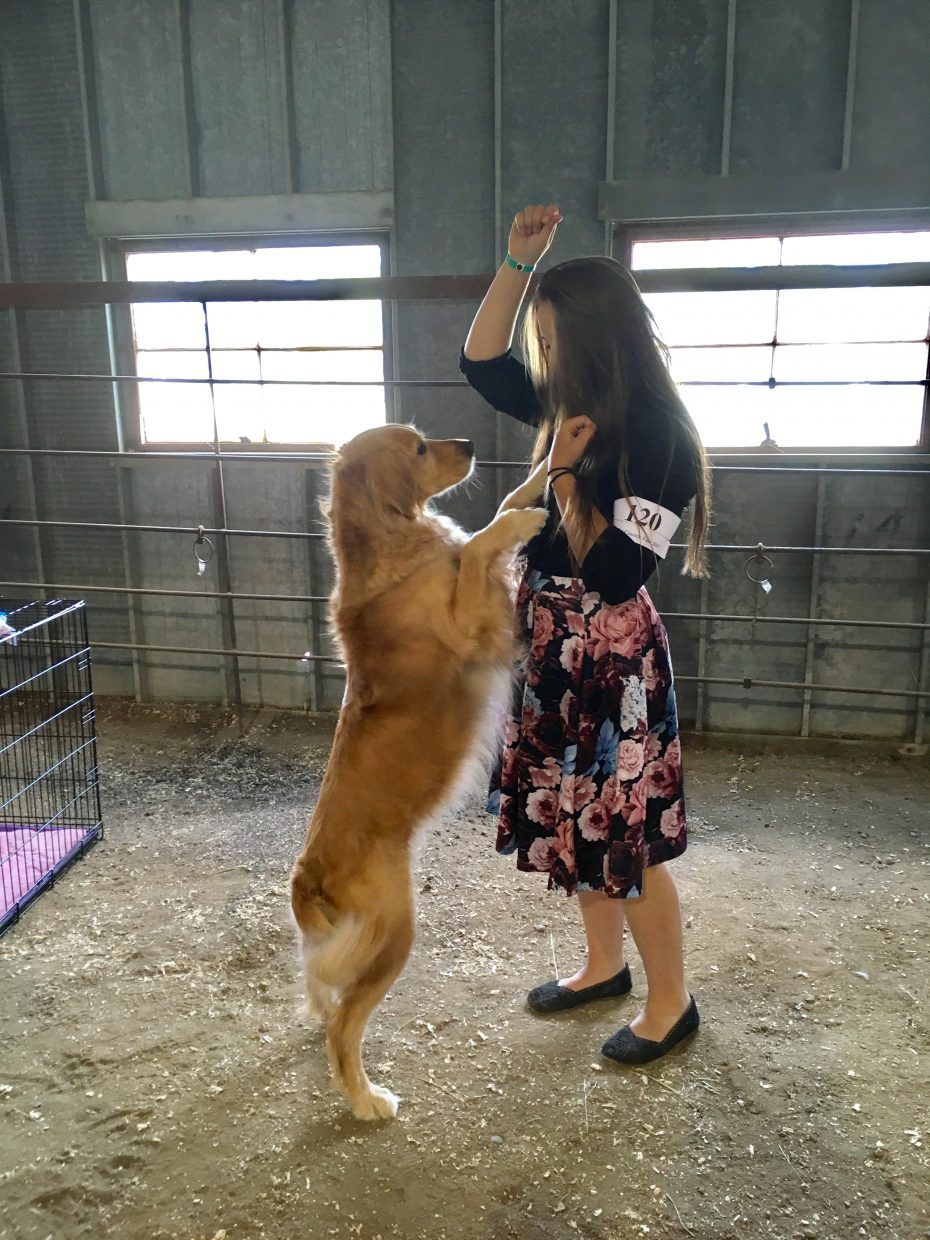 Bella, 6, performs for a treat from handler Allison Jacobson, 14.