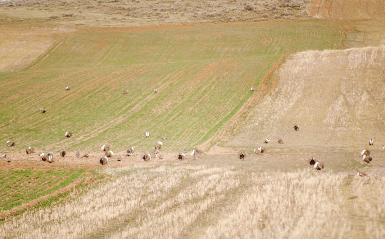 Workshop in Craig to address sage grouse habitat issues for land owners