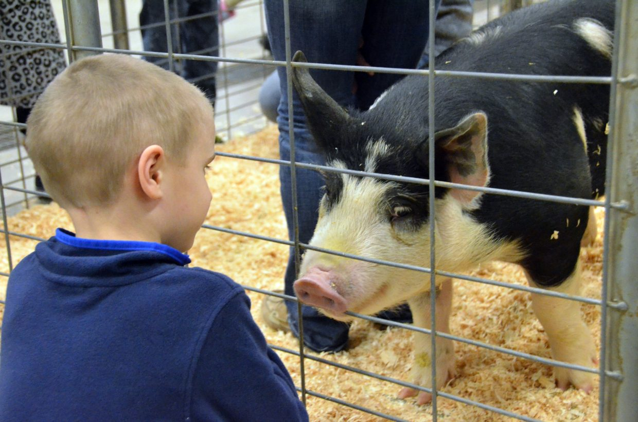 Pigs, cattle, chickens and more animals were available for kindergarten students to meet and greet with during Barnyard Day hosted by Moffat County High School Future Farmers of America.