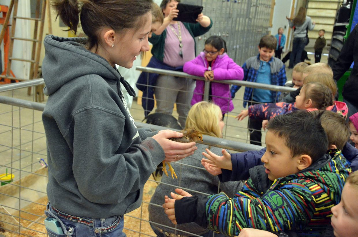 Allison Villard displays a chick for curious students during Barnyard Day hosted by Moffat County High School Future Farmers of America.