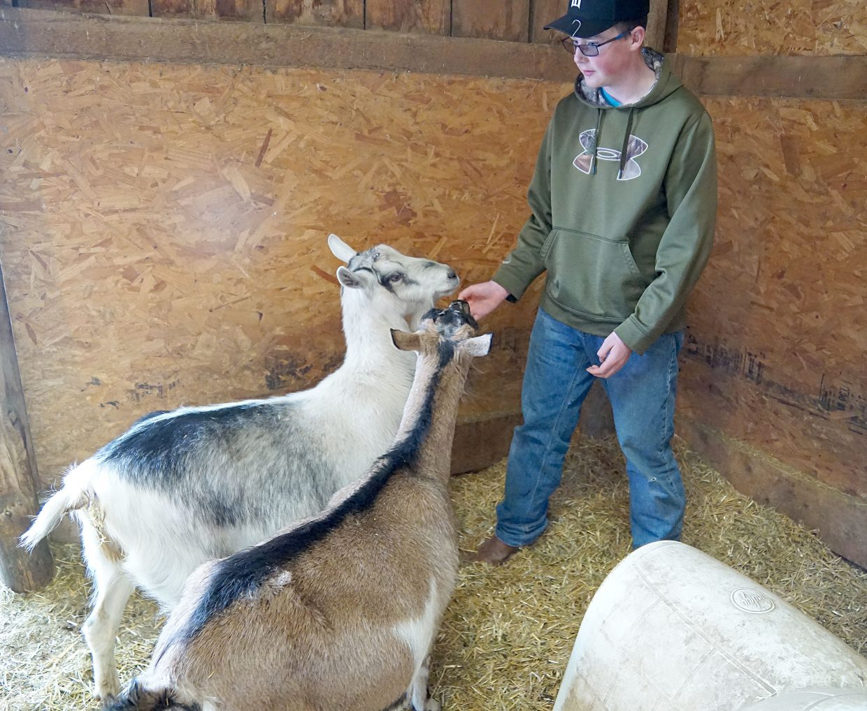 Joey Winters has won awards in 4-H for his ability to handle animals and intends to show some of the family goats during this year's 100 annual Moffat County Fair.