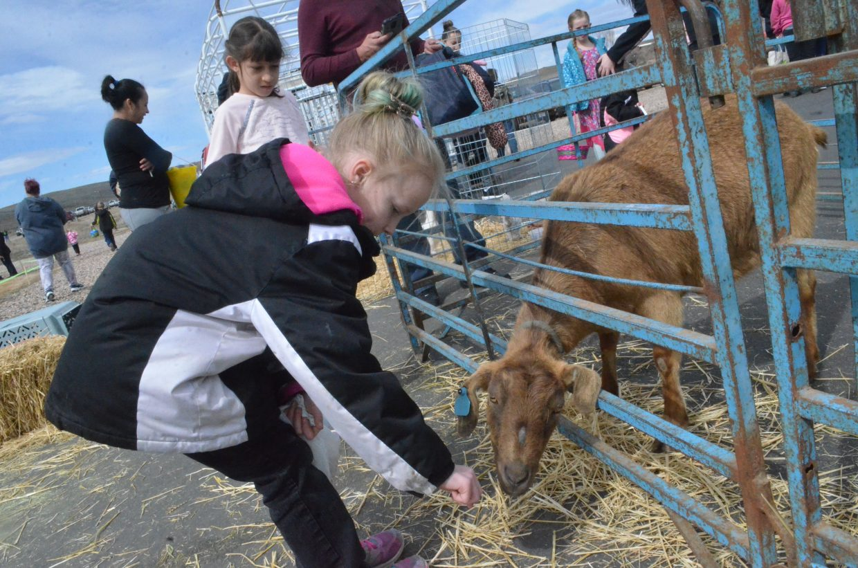 Goats, calves, rabbits and chickens were among the petting zoo animals at New Creation Church's Easter egg hunt.