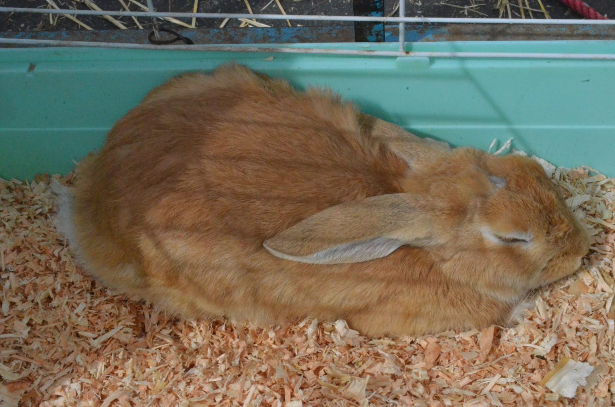 A rabbit was one of several animals in the petting zoo at New Creation Church's Easter egg hunt.