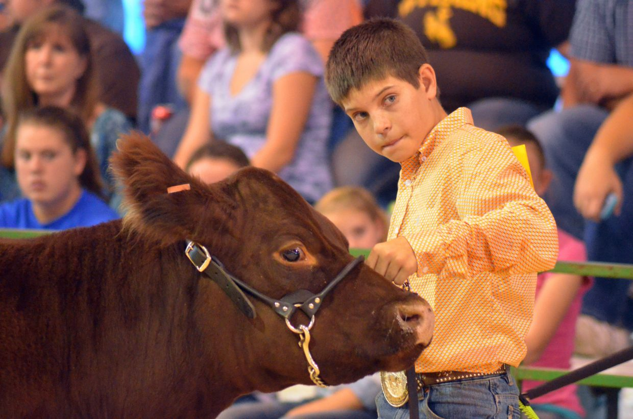 Gage Kawcak anxiously awaits the judges' decision in the showmanship portion of the beef show at 2015's Moffat County Fair. Kawcak walked away with Intermediate Grand Champion in the category.