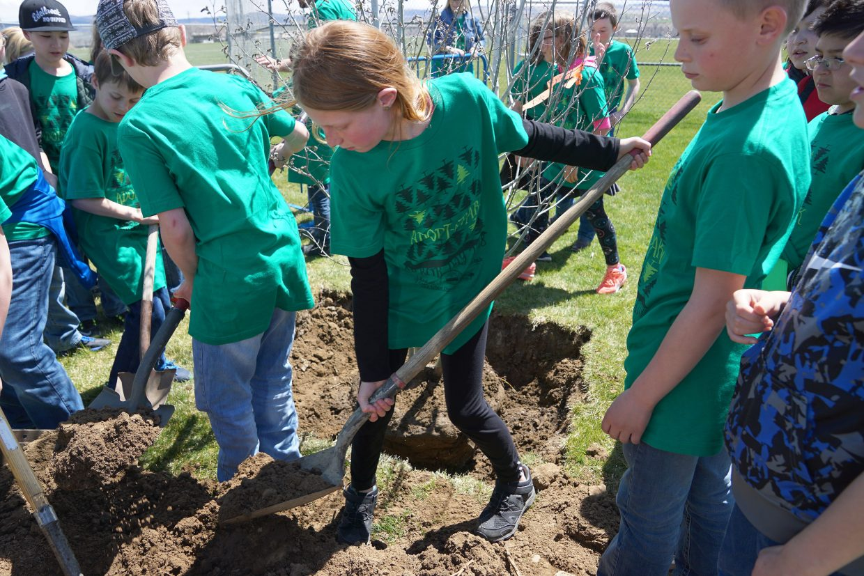 In celebration of Arbor Day, fifth-grade students from Ridgeview Elementary School plant a clump of Aspen trees as their first act in adopting Woodbury Park, part of a new partnership between the city and schools.