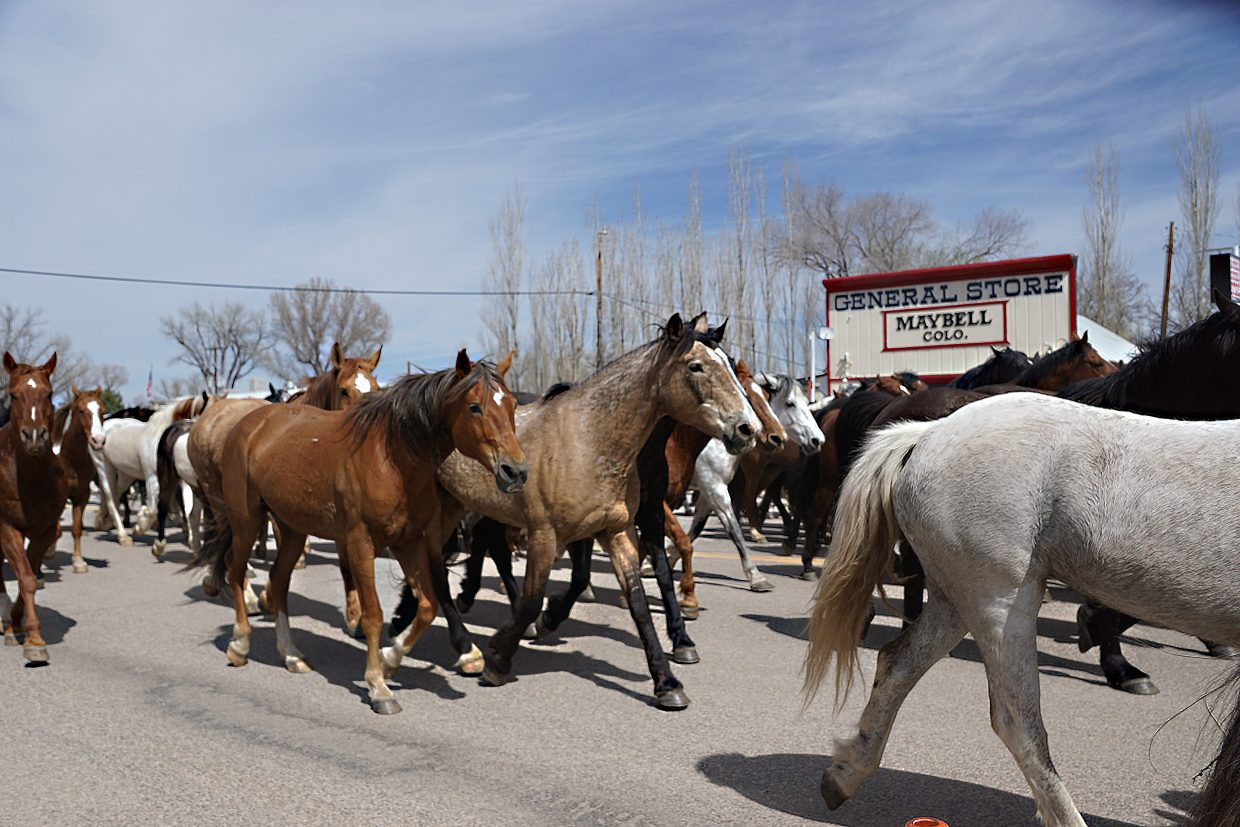 While many of the horses are riderless, none are wild, as the horses of Sombrero Ranches will spend the summer and autumn providing rides at stables throughout Colorado.
