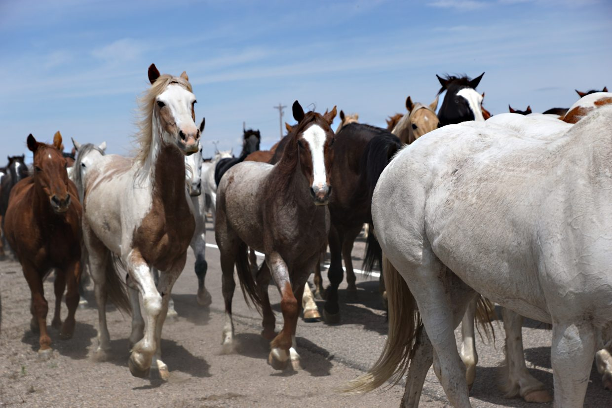Horses are eager to move off the pavement onto the grassy shoulders of the highway.