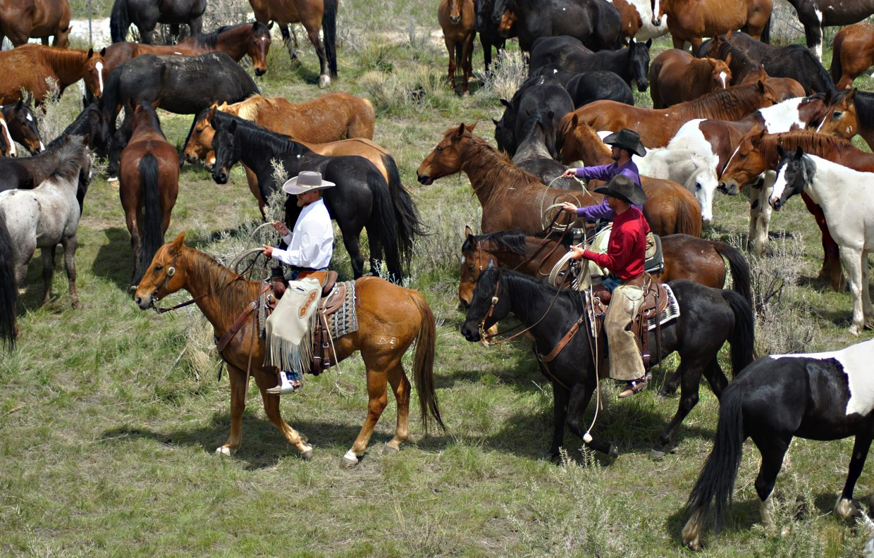 Cowboys ride through the herd watching for any horses that need extra attention. as part of the Great American Horse Drive.