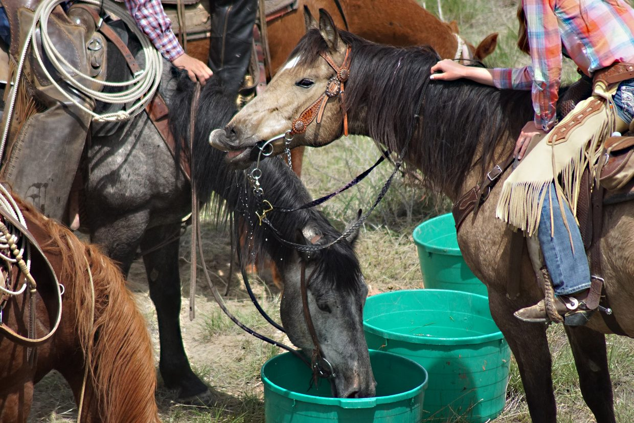 Playing in the water was a welcome lunchtime respite for horses and riders on the warm spring day.