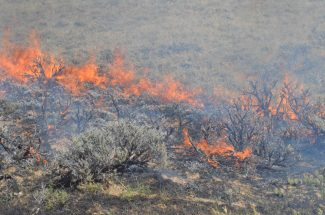 Prescribed burns in store for Moffat County