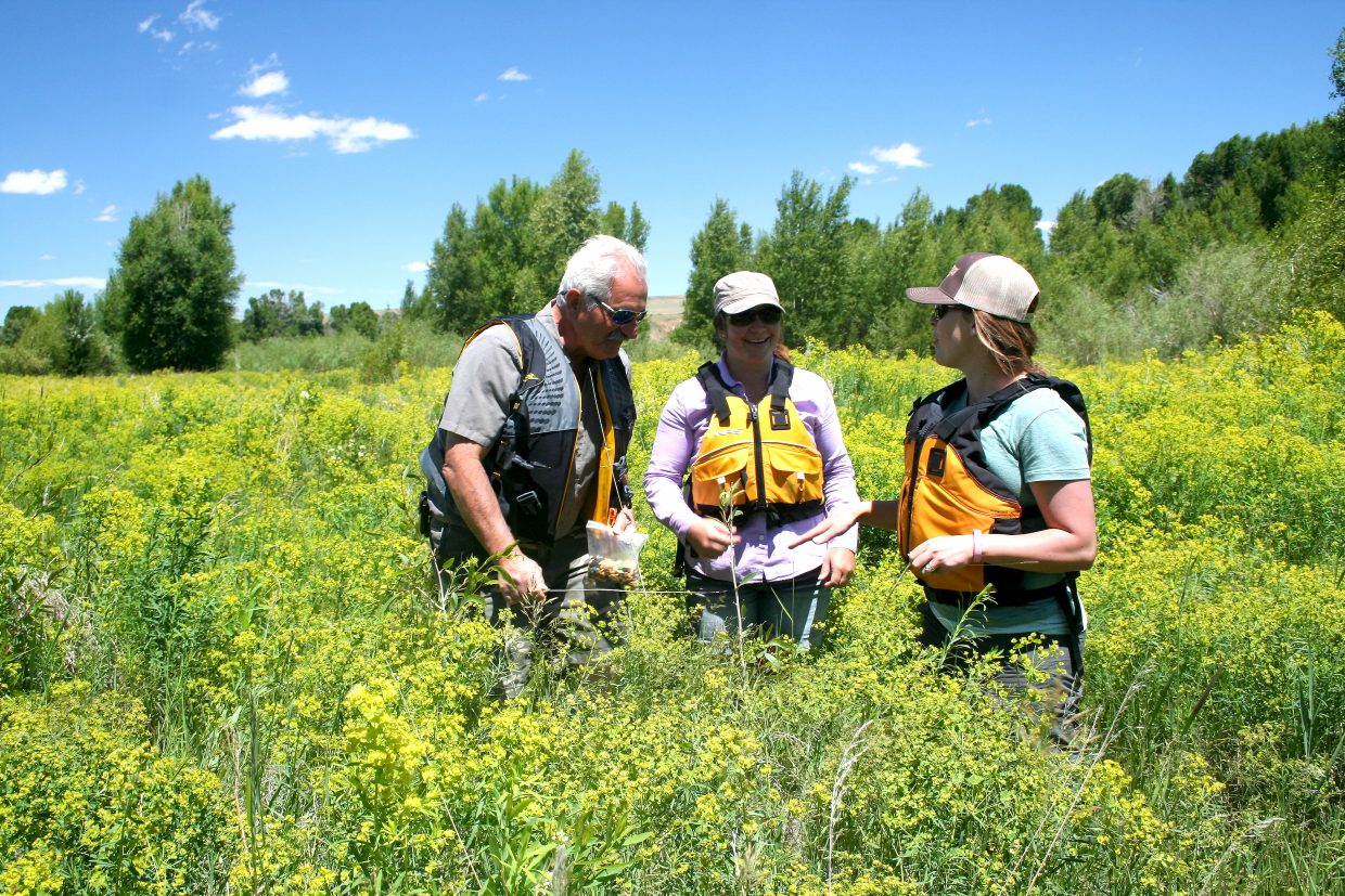 Leafy spurge is an invasive, deep-rooted, non-native perennial plant that is toxic to livestock, and infestations, like the one pictured, can have severe impacts on agricultural productivity, wildlife and river systems. Pictured, from left, are landowner and Moffat County Weed Board Member Nick Charchalis, Little Snake Field Office of Bureau of Land Weed Manager Chris Rhyne and former Moffat County Weed Manager Jessica Counts.
