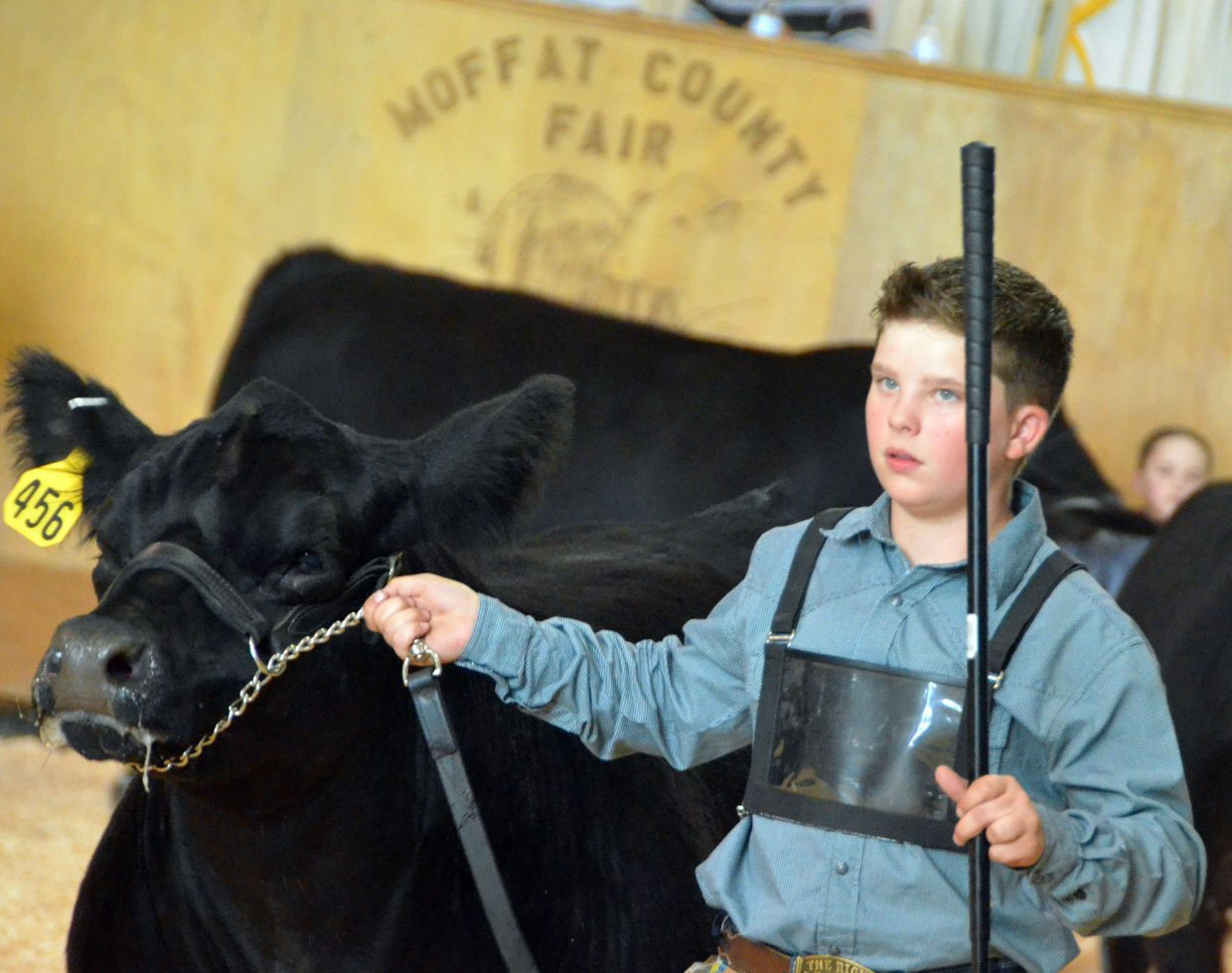 Stone Balleck leads along his steer during the showmanship portion of the Moffat County Fair beef show Thursday.