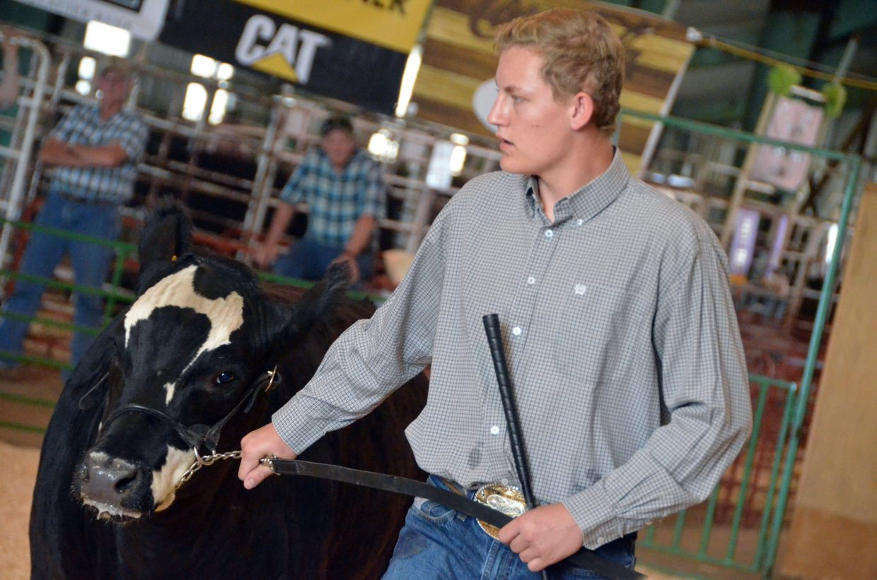 Trevor Hume keeps his steer moving during the Moffat County Fair beef show Thursday.