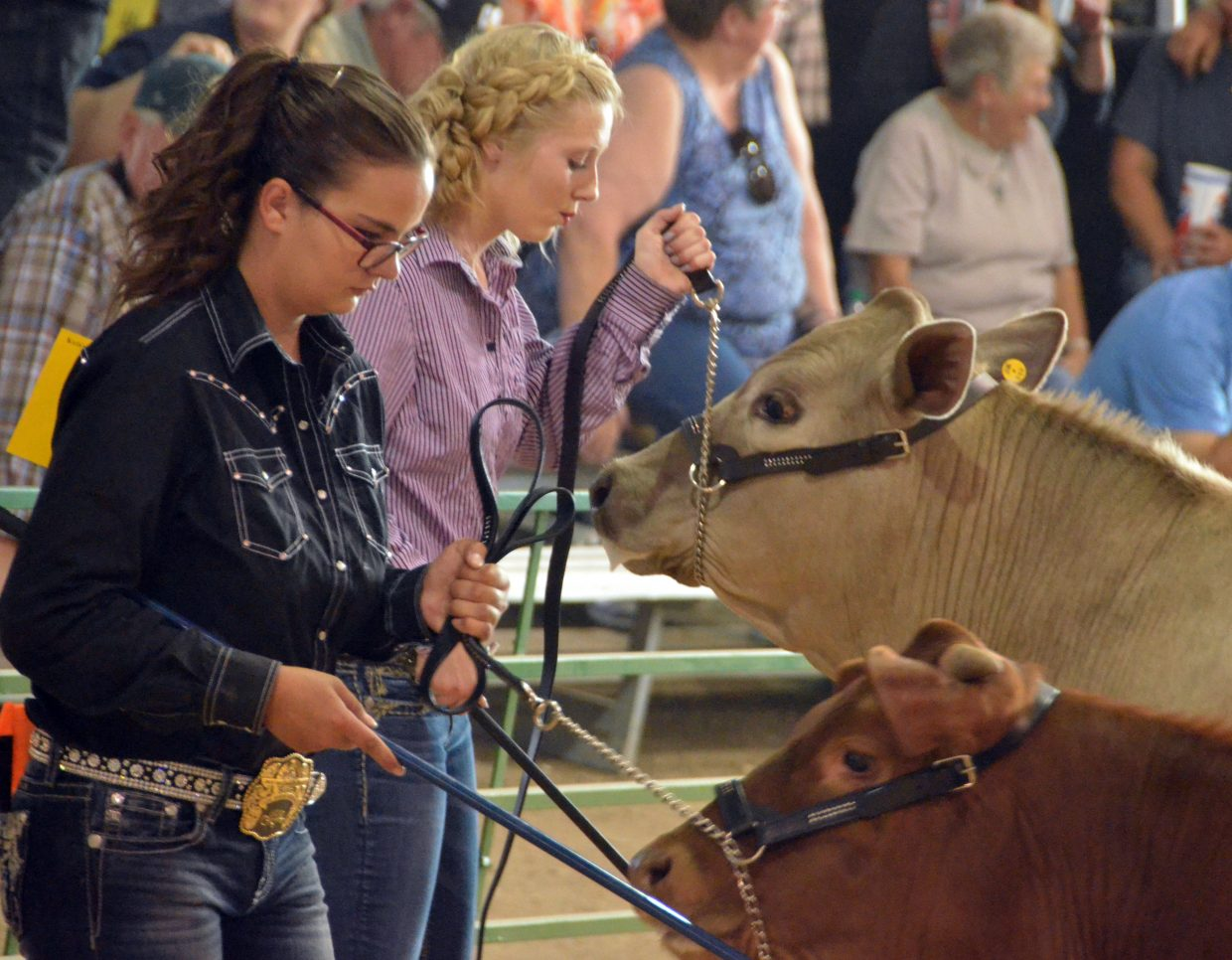 Kristi Barnes, left, and Brianna Burkett keep hold of Barnes' livestock while showing in the feeder class of the beef show Thursday at the Moffat County Fair.