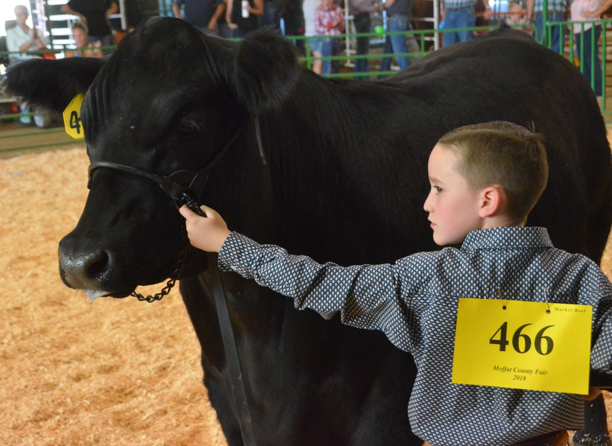 Samuel McIntyre keeps his animal steady during the Moffat County Fair beef show Thursday.