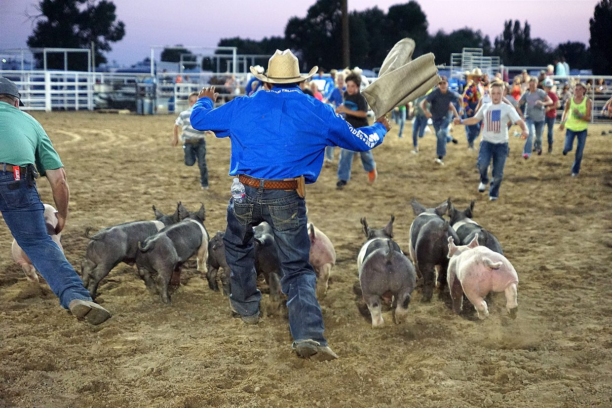 The pigs are urged to run to make catching them more challenging for the oldest group of children to participate in the Catch-a-Pig contest.