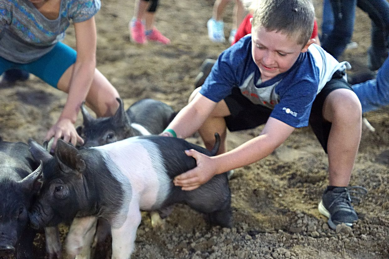 No grease is needed to make these pigs slippery and hard to capture during fourth annual Ridin' & Riggin' Days Rodeo and Catch-a-Pig contest at the 100th Moffat County Fair.
