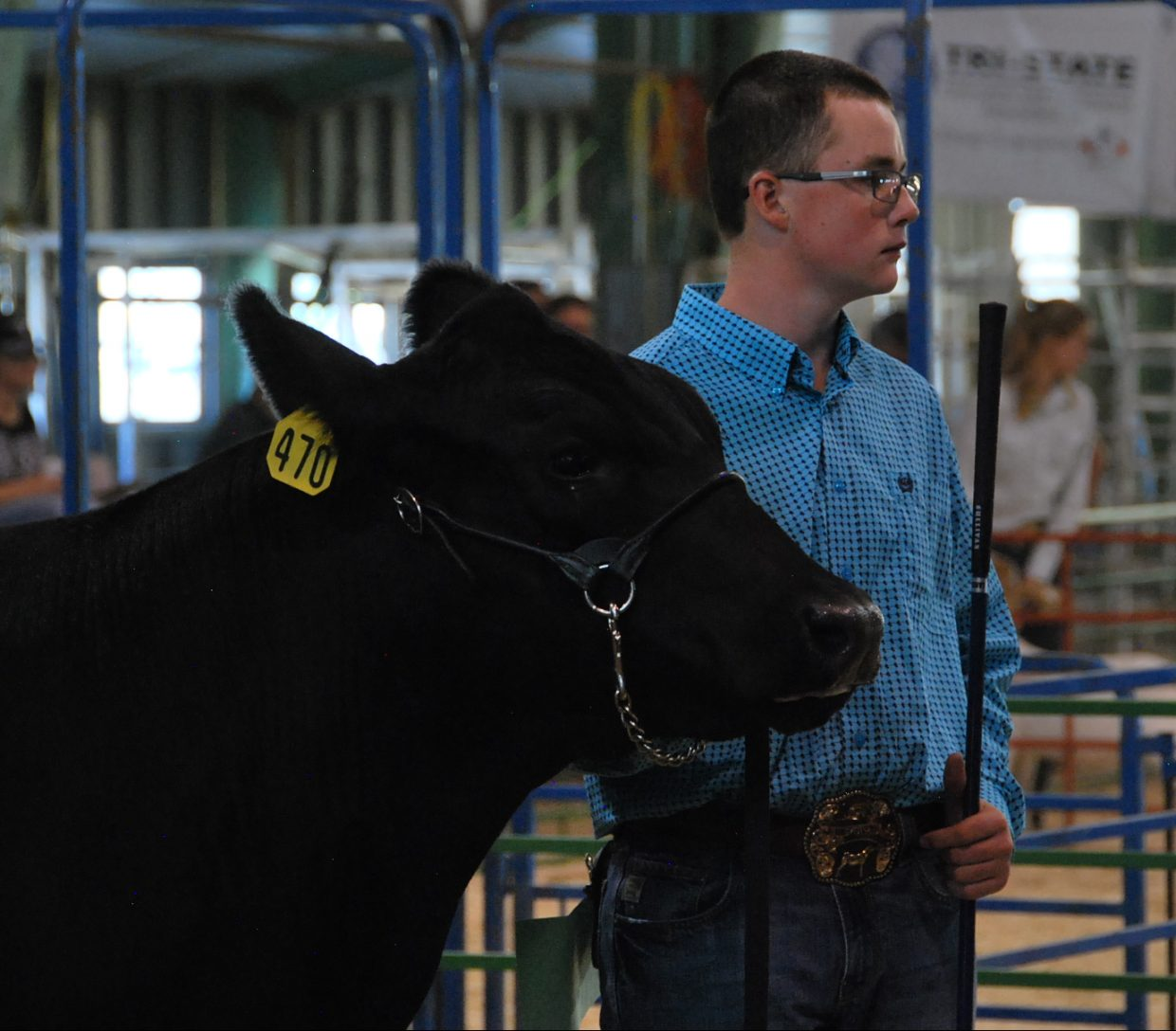 Cattle and other large livestock were part of the large animal round robin Saturday at the Moffat County Fair.