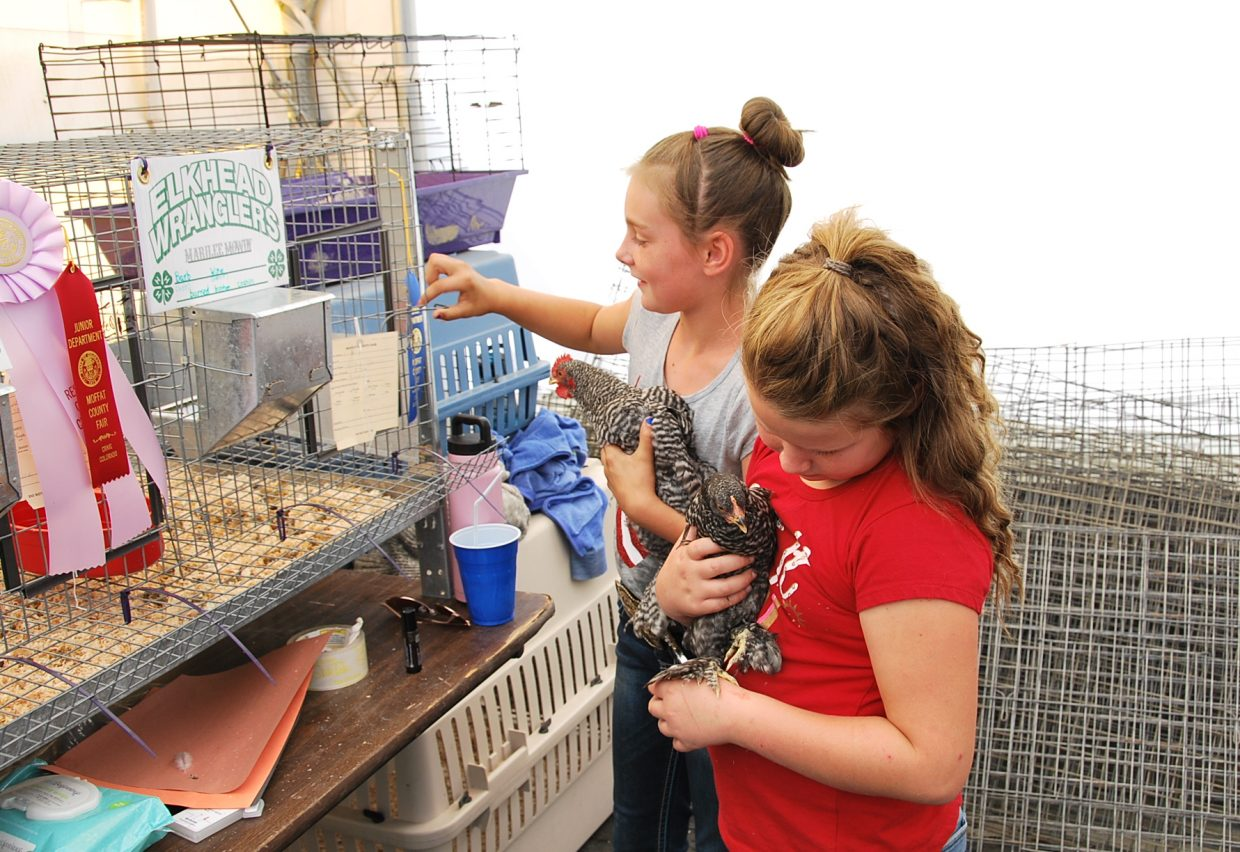 Chickens are a popular attraction at the Moffat County Fair.