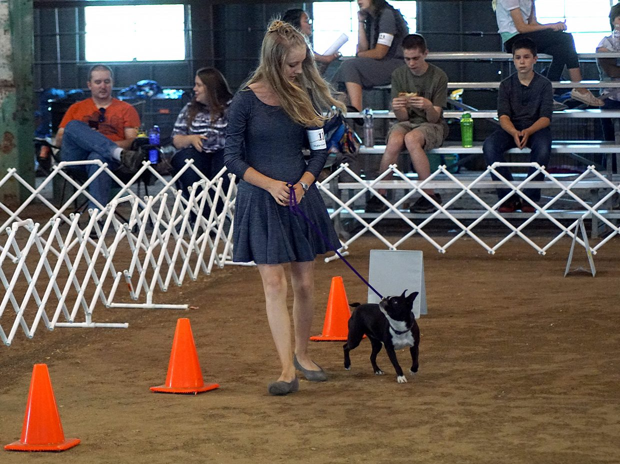 Haley Boatman asks one of the smallest dogs in the competition — a Boston terrier named Macy —  to weave through a set of cones during the rally obedience competition.