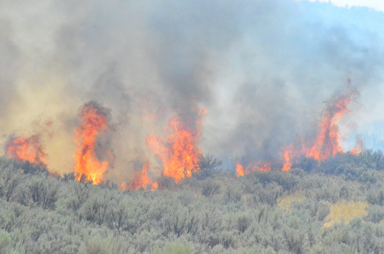 Wet winter, spring may bode well for mild summer wildfire season on Western Slope