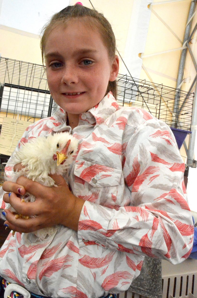 Marilee Mowdy shows off her bantam, Perky, at the poultry show Friday at the Moffat County Fair.